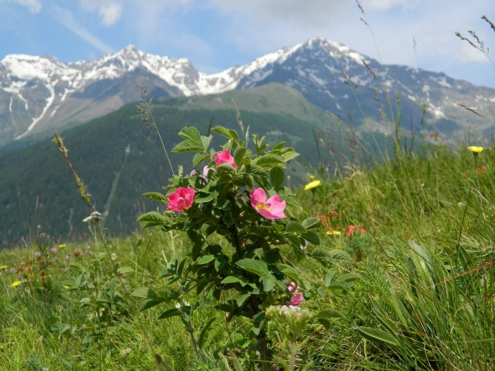accompagnatori-media-montagna-vds_4