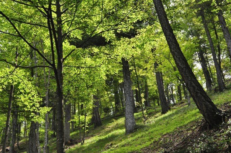 bosco-sul-percorsorisultato