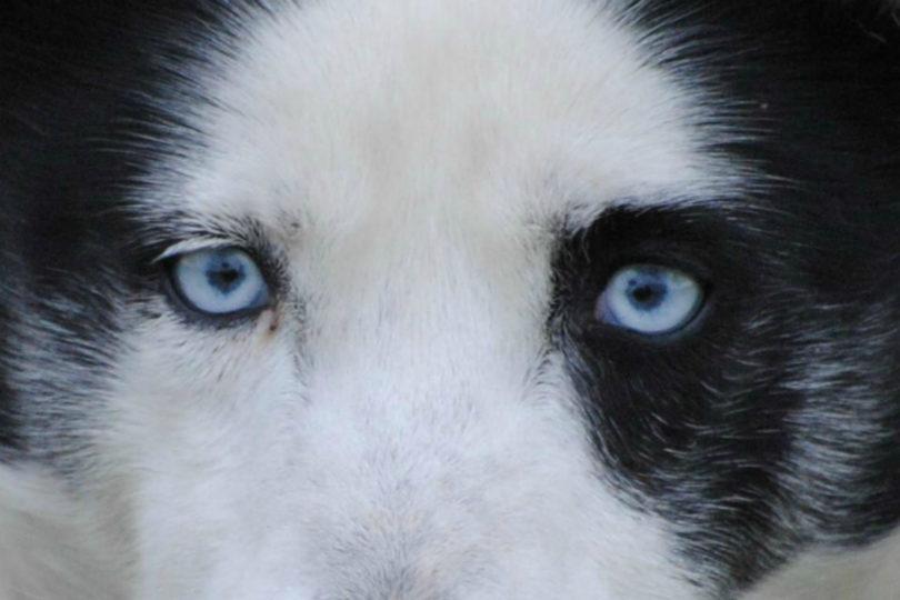 occhi di thai